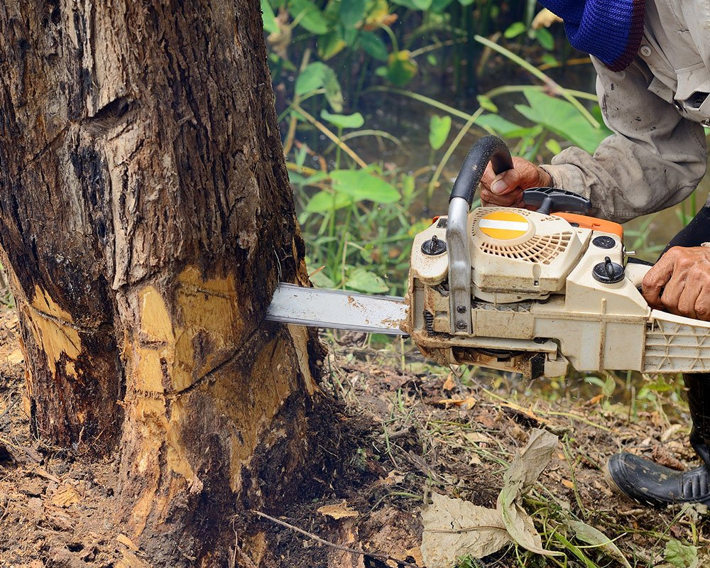 Tree Service Roseville - Tree Removal